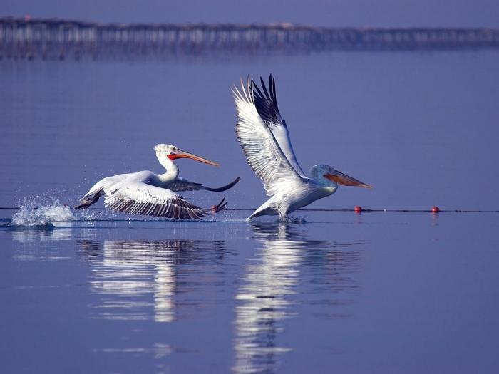 Axios Delta国家公园